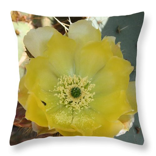 Cactus Throw Pillow featuring the photograph Impressive Beauty by Christiane Schulze Art And Photography