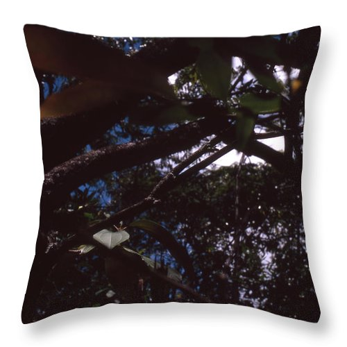Bahia Throw Pillow featuring the photograph In A Brazilian Forest by Patrick Klauss