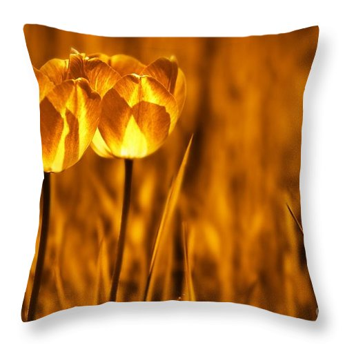 Tulips Throw Pillow featuring the photograph In A Perfect World by Jacky Gerritsen
