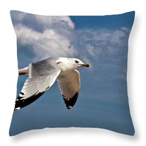 Bird Throw Pillow featuring the photograph In Flight by Donna Walsh