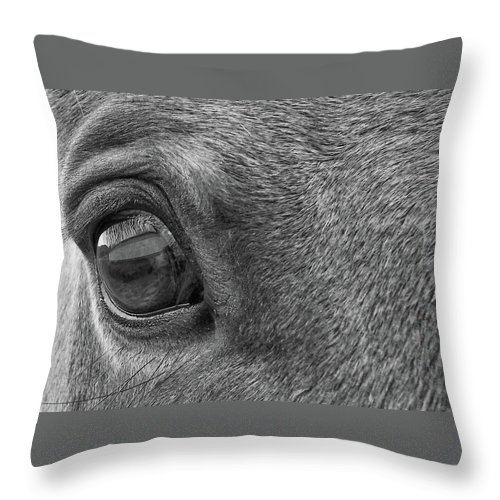 Horse Throw Pillow featuring the photograph In Italian Cavallo View by JAMART Photography
