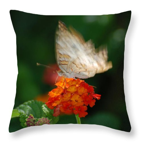 Butterfly Throw Pillow featuring the photograph In Living Color by Rob Hans