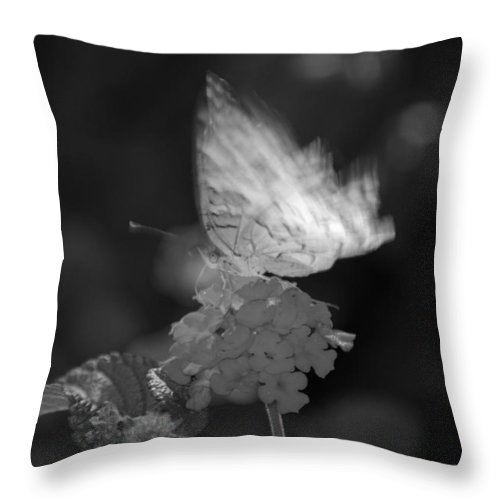 Black And White Throw Pillow featuring the photograph In Motion by Rob Hans