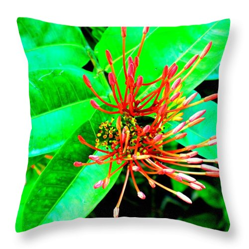 Flower Throw Pillow featuring the photograph In My Garden by Ian MacDonald