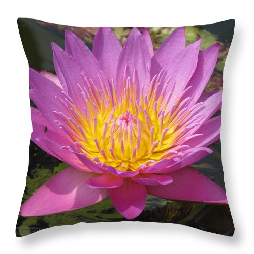 Lotus Throw Pillow featuring the photograph In position by Amanda Barcon