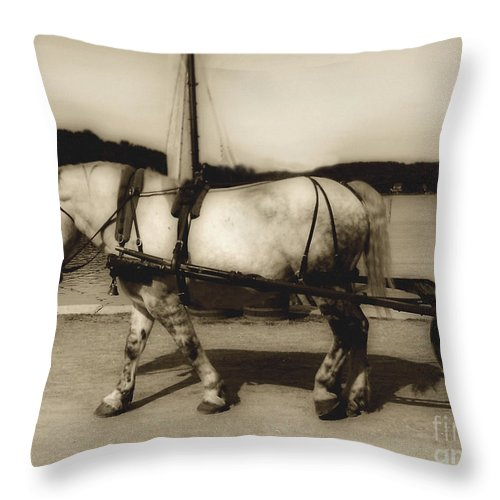 Horse Throw Pillow featuring the photograph In The Cool Of The Evening by RC DeWinter