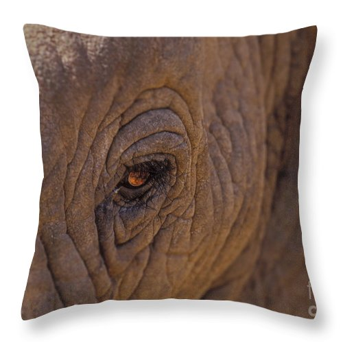 Elephant Throw Pillow featuring the photograph In The Eye Of The Elephant by Sandra Bronstein
