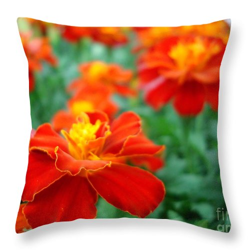 Floral Throw Pillow featuring the photograph In The Garden by Kathy Bucari