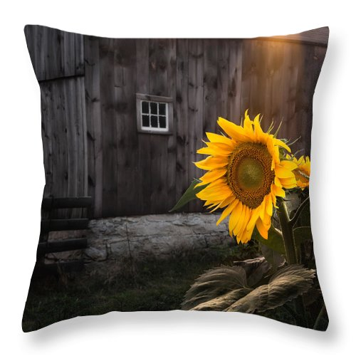 Sunflower Throw Pillow featuring the photograph In The Light by Bill Wakeley