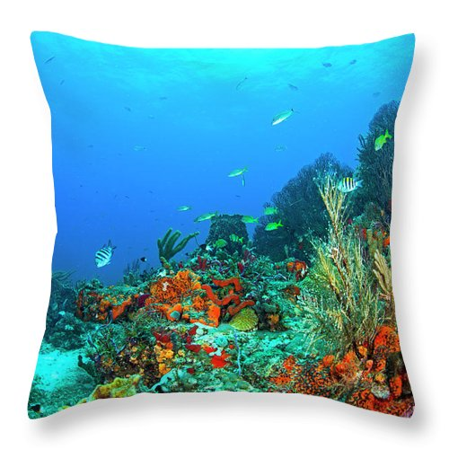 Scene Throw Pillow featuring the photograph In The Moment by Sandra Edwards
