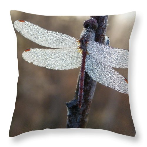 Insects Throw Pillow featuring the photograph In The Morning Light by Peggy King