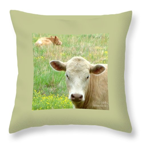 Kathy Bucari Throw Pillow featuring the photograph Posing In The Pasture by Kathy Bucari