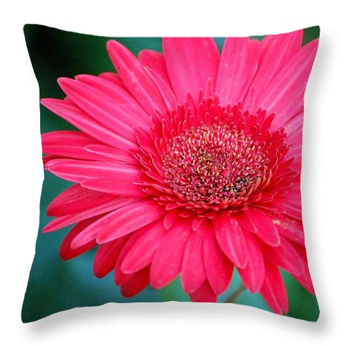 Gerber Daisy Throw Pillow featuring the photograph In the Pink by Debbi Granruth