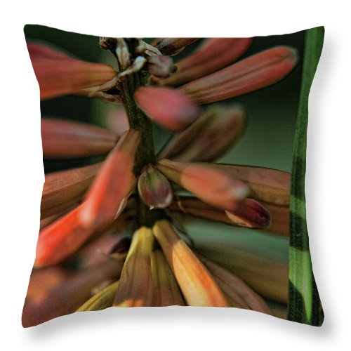 Plants Throw Pillow featuring the photograph In The Weeds by Bonnie Bruno