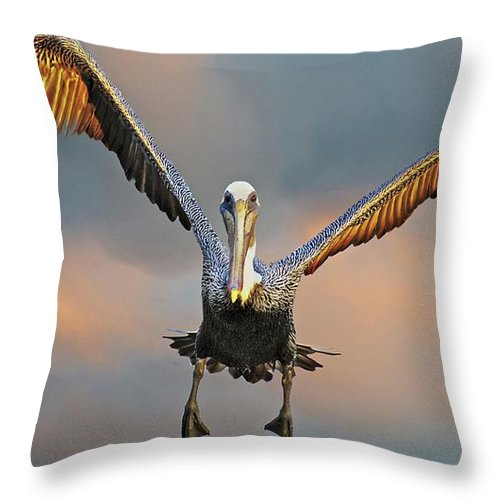 Nature Throw Pillow featuring the photograph Incoming II, California Brown Pelican by Zayne Diamond Photographic