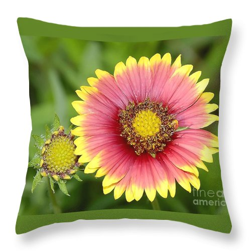 Indian Paintbrush Throw Pillow featuring the photograph Indian Paintbrush by David Lee Thompson