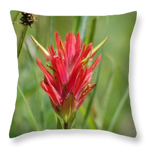 Plants And Flowers Throw Pillow featuring the photograph Indian Paintbrush by D Nigon