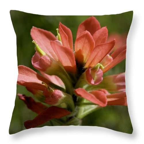 Flower Throw Pillow featuring the photograph Indian Paintbrush by Melissa Millsap-Young