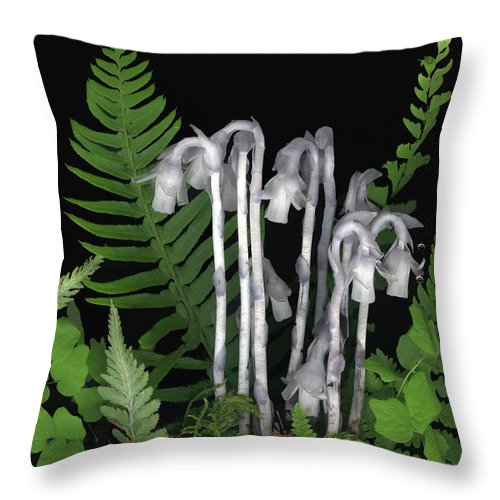 Monotrop Unifolora Throw Pillow featuring the photograph Indian Pipe by Sandi F Hutchins
