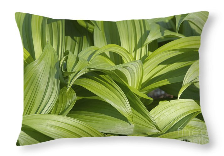 Landscape Throw Pillow featuring the photograph Indian Poke - Veratrum Veride- by Erin Paul Donovan