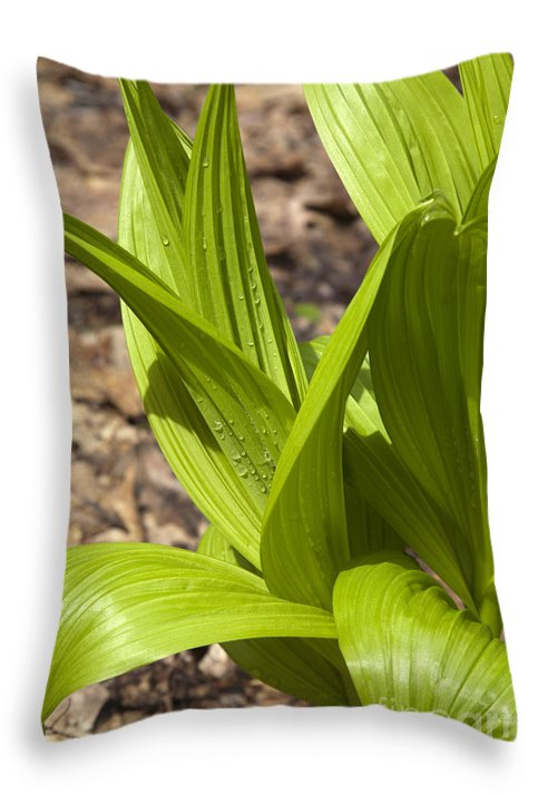 Scenic Throw Pillow featuring the photograph Indian Poke -veratrum Veride- by Erin Paul Donovan