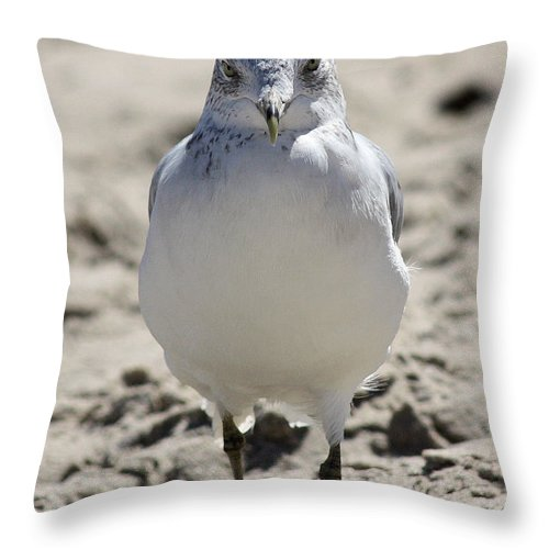 Seagull Throw Pillow featuring the photograph Intense Stare by Mary Haber