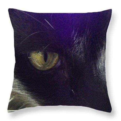 Cat Throw Pillow featuring the photograph Intense by Susan Baker