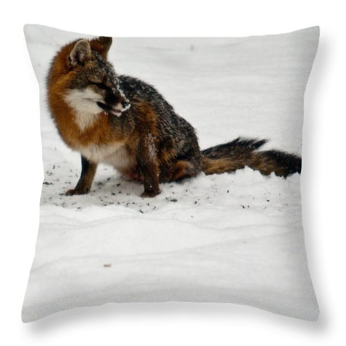 Fox Throw Pillow featuring the photograph Intent Red Fox by Douglas Barnett