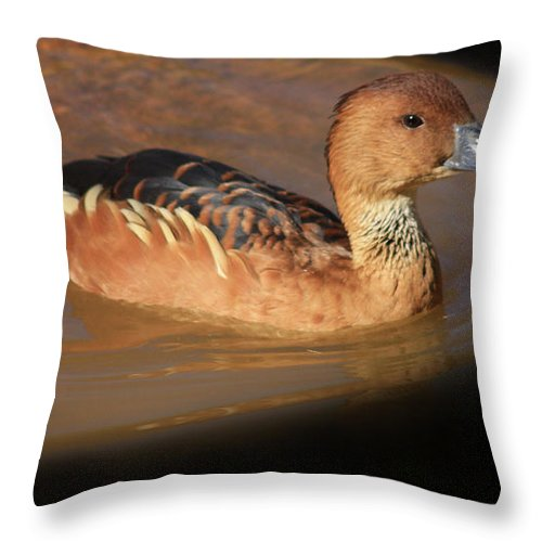 Ducks Throw Pillow featuring the photograph Into The Darkness by Kim Henderson