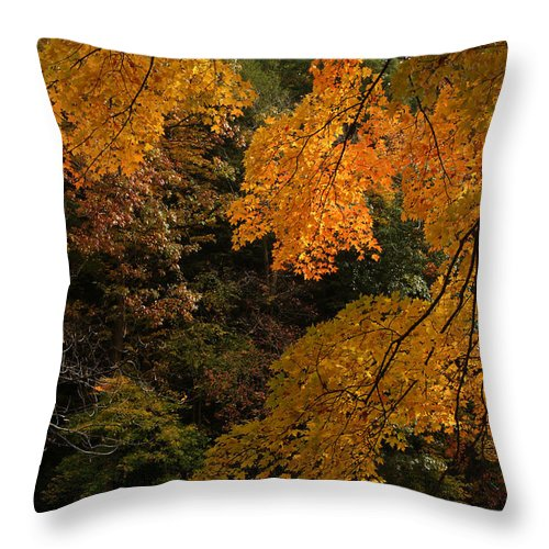 Autumn Throw Pillow featuring the photograph Into The Fall by Michael McGowan