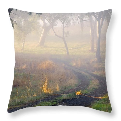 Mist Throw Pillow featuring the photograph Into The Mist by Mike Dawson