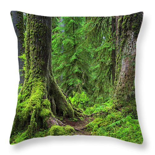 Hoh Rainforest Throw Pillow featuring the photograph Into The Woods by Stephen Stookey