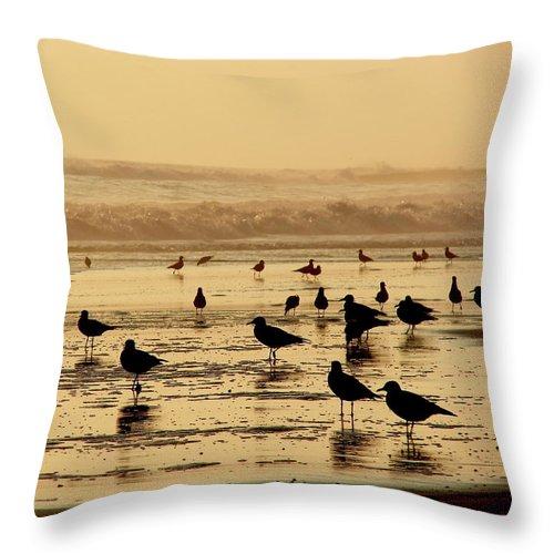 Iquique Throw Pillow featuring the photograph Iquique Chile Seagulls by Brett Winn