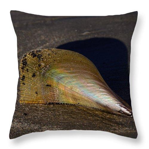 Beach Throw Pillow featuring the photograph Iridescent Pen Shell by Debra Martz