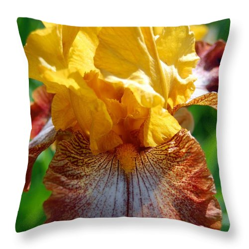 Flower Throw Pillow featuring the photograph Iris 1 by Amy Fose