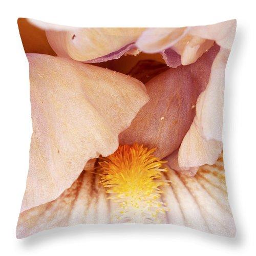 Iris Throw Pillow featuring the photograph Iris by Amanda Kiplinger