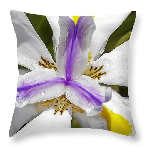 Flower Throw Pillow featuring the photograph Iris An Explosion Of Friendly Colors by Christine Till
