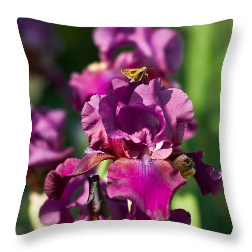 Throw Pillow featuring the photograph Iris And Moth by Rod Lindley