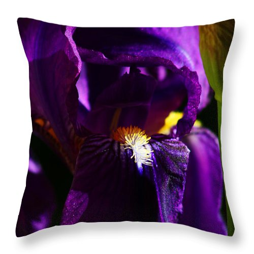 Flower Throw Pillow featuring the photograph Iris by Anthony Jones