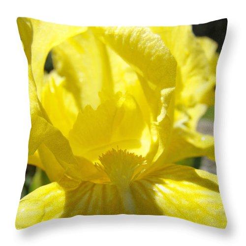 �irises Artwork� Throw Pillow featuring the photograph Iris Flower Yellow Macro Close Up Irises 30 Sunlit Iris Art Print Baslee Troutman by Baslee Troutman
