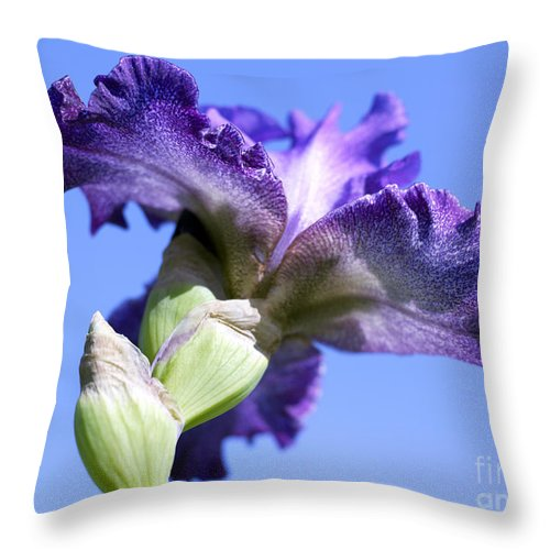 Genus Iris Throw Pillow featuring the photograph Iris Flowers by Tony Cordoza
