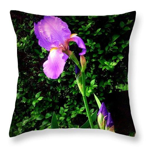 Iris Throw Pillow featuring the photograph Iris In Sunshine by Debra Lynch