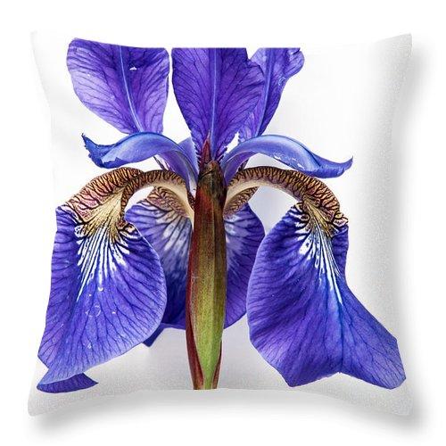 Iris Throw Pillow featuring the photograph Iris by Jason Baldwin - Shared Perspectives Photography