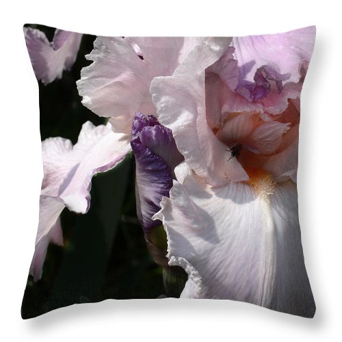 Flower Throw Pillow featuring the photograph Iris Lace by Steve Karol