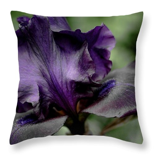 Betsy Lamere Throw Pillow featuring the photograph Iris - Superstition by Betsy LaMere