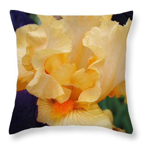 �irises Artwork� Throw Pillow featuring the photograph Irises Art Prints Peach Iris Flowers Artwork Floral Botanical Art Baslee Troutman by Baslee Troutman