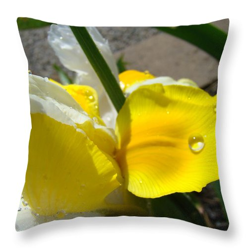 �irises Artwork� Throw Pillow featuring the photograph Irises Artwork Iris Flowers Art Prints Flower Rain Drops Floral Botanical Art Baslee Troutman by Baslee Troutman
