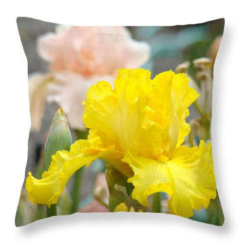 �irises Artwork� Throw Pillow featuring the photograph Irises Botanical Garden Yellow Iris Flowers Giclee Art Prints Baslee Troutman by Baslee Troutman