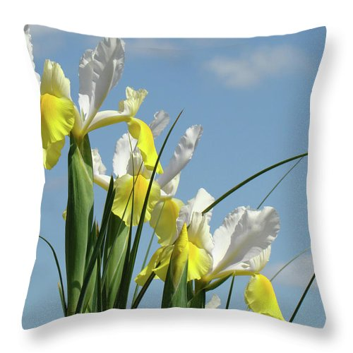 Iris Throw Pillow featuring the photograph Irises In Blue Sky Art Print Spring Iris Flowers Baslee Troutman by Baslee Troutman