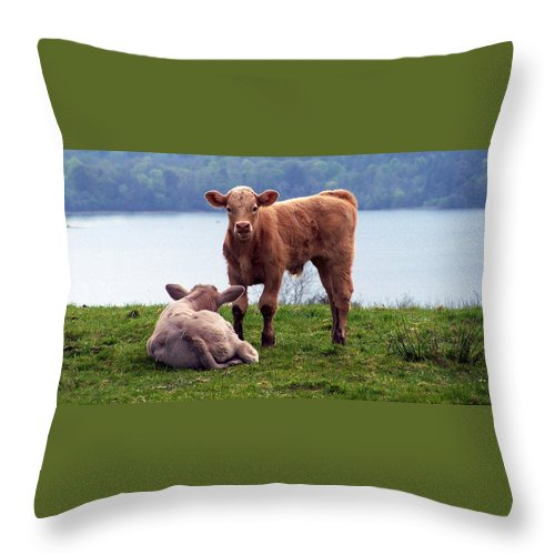 Ireland Throw Pillow featuring the photograph Irish Calves At Lough Eske by Teresa Mucha